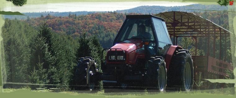 NC Choose and Cut Christmas Tree Farms|Order Live ...